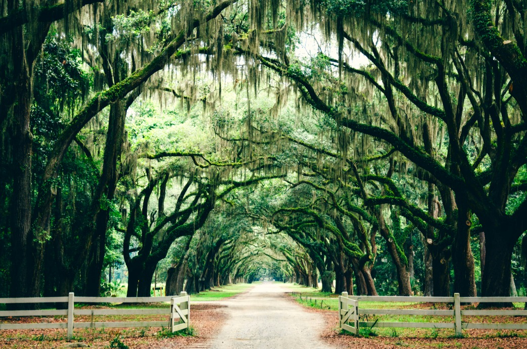 5 Things to Love About the South (from an Expat's perspective)