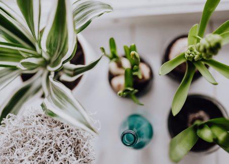 5 Low-Maintenance Houseplants That Anyone Can Grow